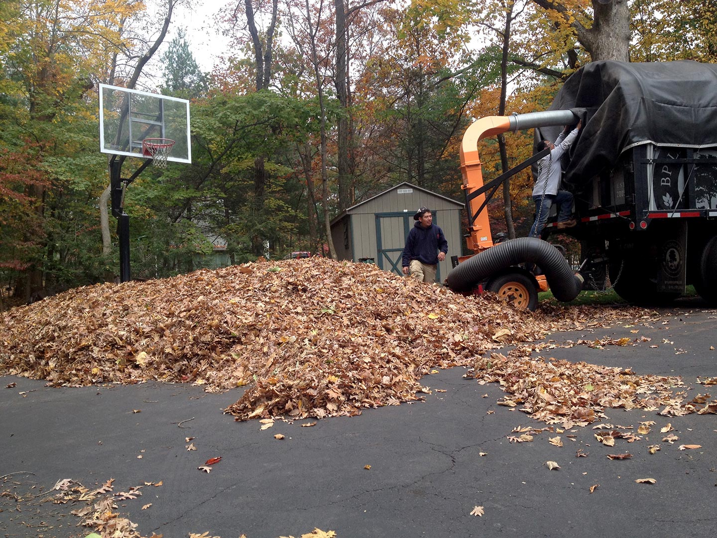 fall cleanup bp landscaping